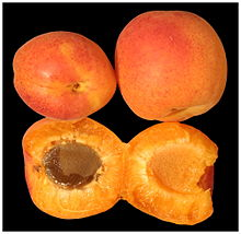 Apricots one open.jpg