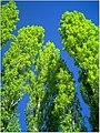 April Parc Natural Freiburg Germany - Master Landscape Rhine Valley Photography 2014 Landgut Mundenhof - panoramio (48).jpg