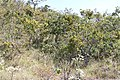 Araguainha - State of Mato Grosso, Brazil - panoramio (671).jpg