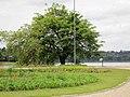 Arbol y lago - panoramio.jpg