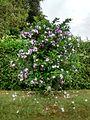 Arbusto con flores.jpeg
