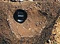 Archaeocyathan limestone (Ajax Limestone, Lower Cambrian; Mt. Scott Range, South Australia) 7.jpg
