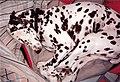 Assume the Sleep Position (3753007993).jpg