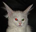 Astrid com orelhonas-crop.jpg
