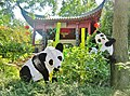 Au Jardin Chinois du jardin Botanique de Montréal, gentils pandas - panoramio.jpg