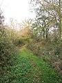 Autumn colours on the path to Mangreen - geograph.org.uk - 1602963.jpg