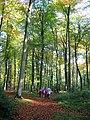 Autumn in Gutteridge's Wood - geograph.org.uk - 1071601.jpg