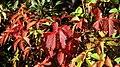 Autumn palette (15563620156).jpg