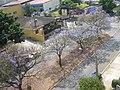 Av. Mal. Carmona florida 2007 - panoramio.jpg
