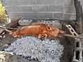 BCA pig slaughtering 5.jpg