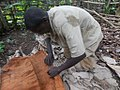 Back cloth preparation from a fig tree in Uganda 09.jpg