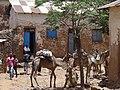 Backstreet Scene with Camels - Axum (Aksum) - Ethiopia (8701139203).jpg