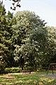 Bagolaro a Villa Ghirlanda.jpg