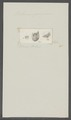 Balanus spongiarum - - Print - Iconographia Zoologica - Special Collections University of Amsterdam - UBAINV0274 101 02 0012.tif
