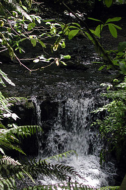 A stream about 4 feet (1.2 meters) wide tumbles over a 3-foot (1-meter) waterfall in a forest.