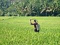 Bali Farmer1.JPG