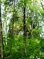 Baltenstein 03.jpg