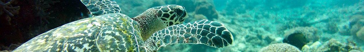 Banner Nusa Penida turtle.jpg