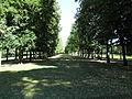 Baumallee Hofgarten Ansbach.JPG