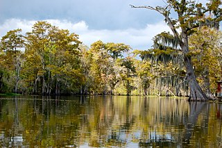 Bayou French term for a body of water typically found in flat, low-lying area