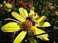 Bee (127495399).jpeg