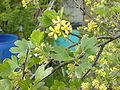 Beerenbusch.jpg