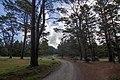 Belanglo NSW 2577, Australia - panoramio (14).jpg