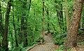 Belvoir forest, Belfast (3) - geograph.org.uk - 1515569.jpg