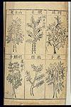 Bencao Gangmu -- Ming materia medica, Trifoliate orange, etc. Wellcome L0039330.jpg