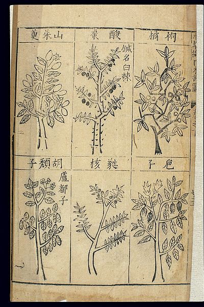 types of trees from a 1st edition of Bencao Gangmu, illustrated by Li Shizhen's son (c. mid-16th century AD) - Compendium of Materia Medica