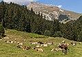 Bergweg tussen Andiast, Ladinas en Breil-Brigels (actm) 19.jpg