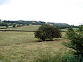 Beside the Welshpool and Llanfair Light Railway 231785.jpg