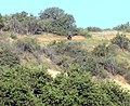 Best Friends Walk, Oakmont Park, Redlands, CA 4-2012 (6941983280).jpg