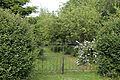Betts Lane gate, hedge and garden at Nazeing, Essex, England 01.JPG