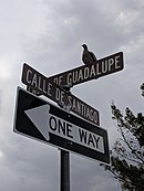 Bird on one way calle.jpg