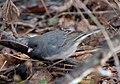 Bird park 3158.jpg