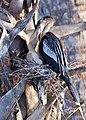 Birds (17710779576).jpg