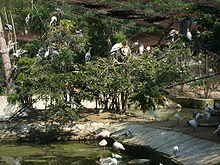 Birds Enclosure in Vandaloor Zoo.JPG