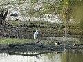 Birds at Vellode Bird Sanctuary.jpg