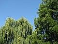Bistrita - Parcul Central (819562662).jpg