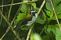 Black-winged Saltator - South Ecuador S4E8735 (23183556624).jpg