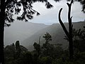 Black River Gorges In Mist (4823273565).jpg