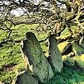 Blackburn, UK - panoramio (35).jpg