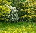 Bloemenweide aan rand van boomwal. Locatie, Natuurterrein De Famberhorst 06.jpg