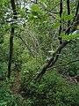 Bloomfield Provincial Park IMG 8213 (1849026460).jpg