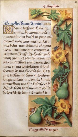 Страница «Часослова Анны Бретонской» с изображением тыквы обыкновенной (около 1505 года)