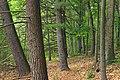 Bob Webber Trail (9) (14599825655).jpg
