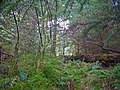 Boggy feathermoss forest at the west edge of West Loch Tarbert - geograph.org.uk - 1446888.jpg