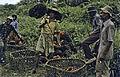 Borneo1981-041.jpg