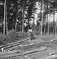 Bosbewerking, arbeiders, boomstammen, gereedschappen, werkzaamheden, Bestanddeelnr 253-5940.jpg